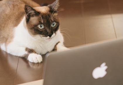 ネットテレビを見る猫